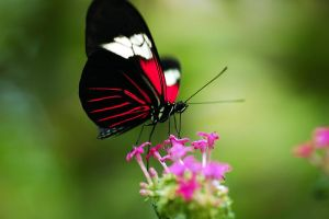 A Butterfly by atengphotography