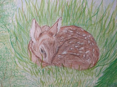 fawn in grass by Mork-from-Ork