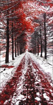 Bloody Autumn (wide view) by Frider