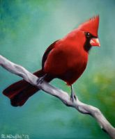 Cardinal on Branch by TernFeather