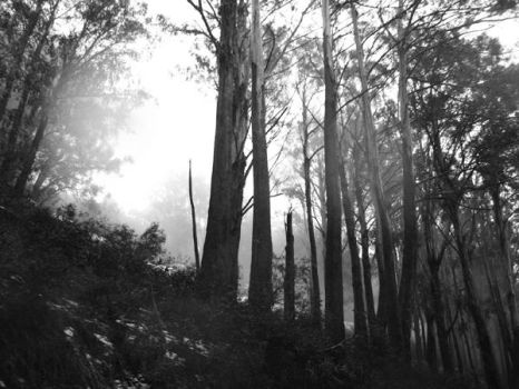 Trees 01 by infinately