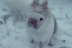 Snoopy - Winter by ShareTheMoment