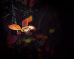 twinkle by anstasie