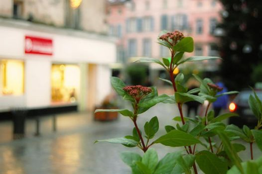 Flowers of Epinal by Dill-Tasker