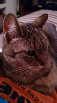 Lena, my female cat by lucie-boulette