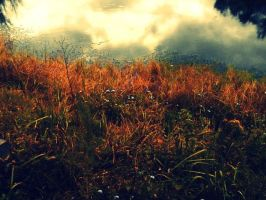 What Autumn Will Look Like. by leannlaughlove