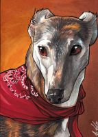 Sarah  the Greyhound by lizspit
