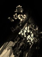 Death in Sepia by ArielOlivia