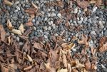 Stones And Leafs by Focus-stock