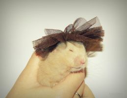 lady hamster by florina23