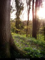Forest 37 by AnitaJoy-Stock