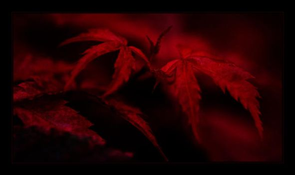 Deep Red Night by CyNthiA-v-FiNcAstle