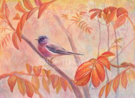 Rose-breasted Robin in the Rowan. by leelastarsky
