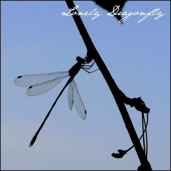 Lonely Dragonfly by Cassiopeeh