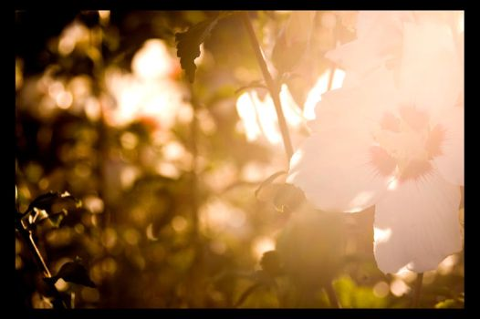 Flower, Sunlight by DirtHat