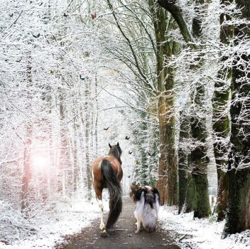 Horse and Wolf by jeweljk