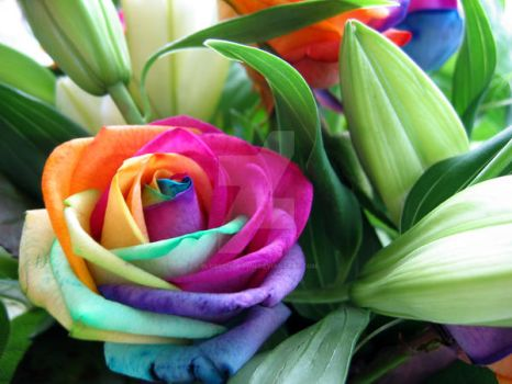 Rainbow Roses by blossomcrown