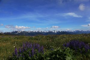 View of the Olympic Mountains by iamkjelstrup