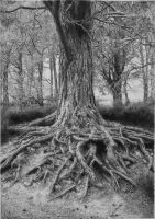 Tree drawing by absolutemadman
