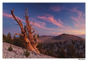 Bristlecone Sunset by collectiveone