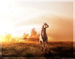 Pegasus - PRINTS AVAILABLE by Cantatus-Promise