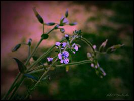 Wildflower  by gintautegitte69