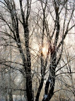 The sun in trees by fudins