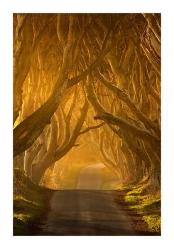 The Dark Hedges by Klarens-photography