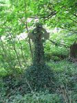 Objects 075 gravestone covered in ivy by Dreamcatcher-stock