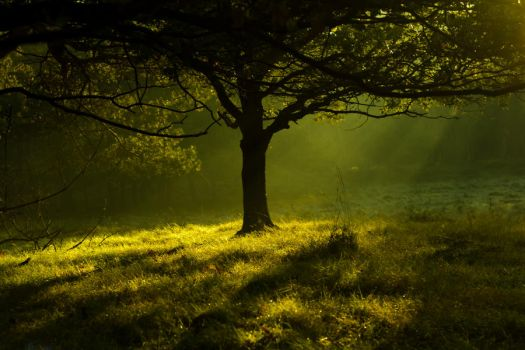 Tree in the morning by Ma5tt