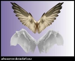 Wings PNG by AshenSorrow