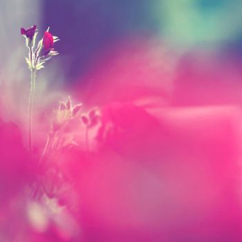 When pink meets the wind. by incredi