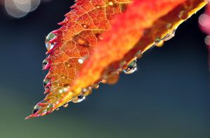 Autumn by SmartyPhoto