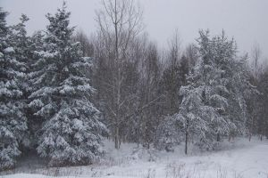 Winterland 1 STOCK by philippeL