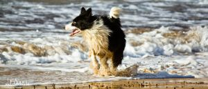 Playing in the Sand IV by Maltese-Naturalist