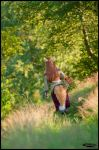 Horo / Holo - Spice and Wolf - [Wandering] by GeniMonster