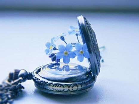 forget-me-not 3 by Iridescent-happinesS