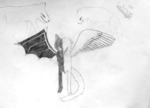 Wings OC by Arctic-Wolf-Lover