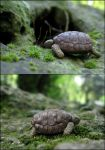 My Mother's Turtle by AtriellMe