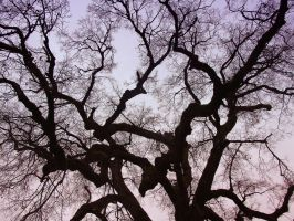Branches by mnedel