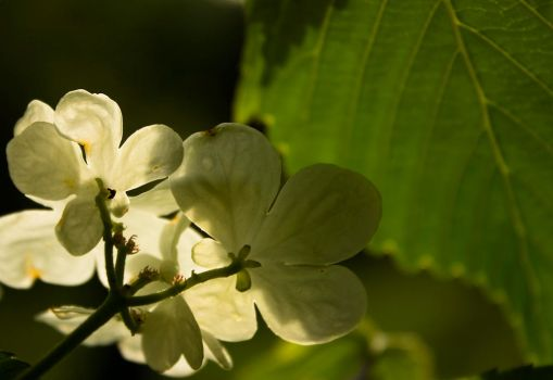 Behind white flowers by eannez