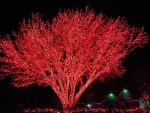 HUGE TREE WITH RED CHRISTMAS LIGHTS by KerensaW