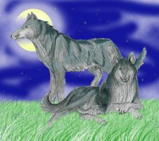 Two Wolves by DrMario64