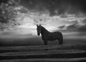 Equine Portrait by Zebzs