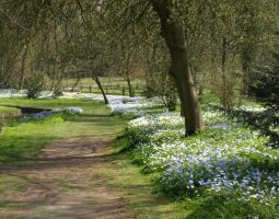 Woodland path spring by 231205-stock