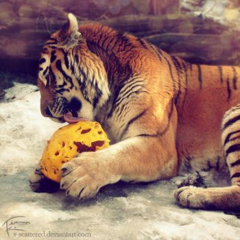 Tiger and his ball by s-scattered