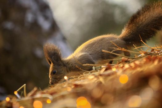 Sneaky Squirrel by Rmith