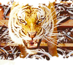 Life of Pi GIF: Back Down by Caitybee