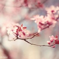 Pink Blossom by bellalleb-photo
