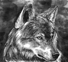 Wolf by Karilain